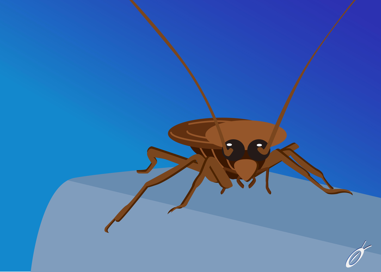 Doctor-cockroach-thailand-the-best-กำจัดแมลงสาบ-อันดับหนึ่ง-ในไทย-ด้วยน้ำยาสมุนไพร